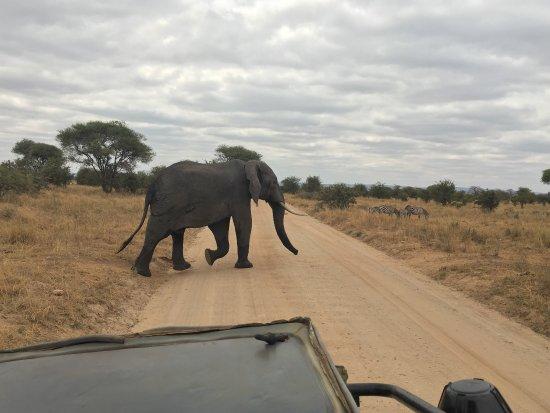Arusha National Park Hotels