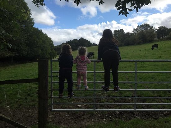 Coalbrookdale, UK: Cow field at the bottom of the site