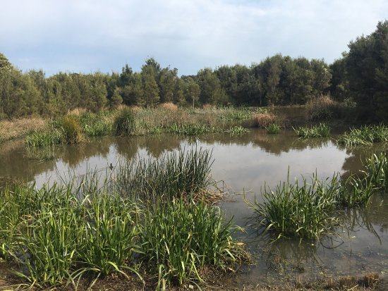 Cranbourne, ออสเตรเลีย: Botanic Ridge Wetlands