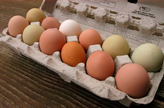 Clayton, جورجيا: Farm Fresh Eggs from Pastured Chickens