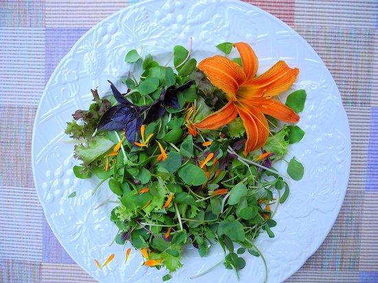 Clayton, جورجيا: Fresh Organic Micro-Green Salad