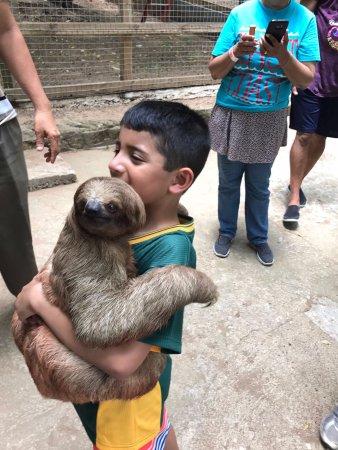 Sandy Bay, ฮอนดูรัส: with the sloths