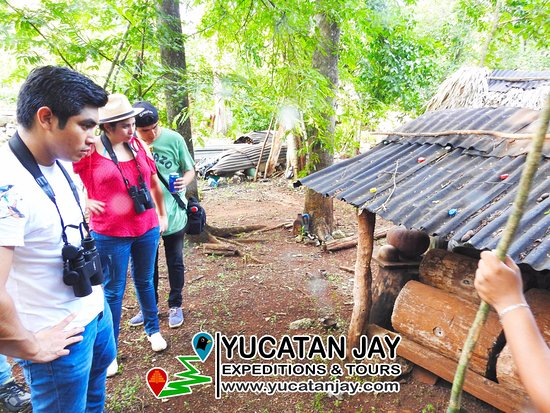 Yucatan Jay Expeditions & Tours