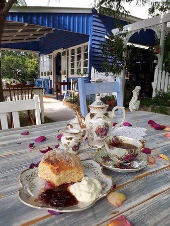 Amamoor, Australia: Devonshire Tea