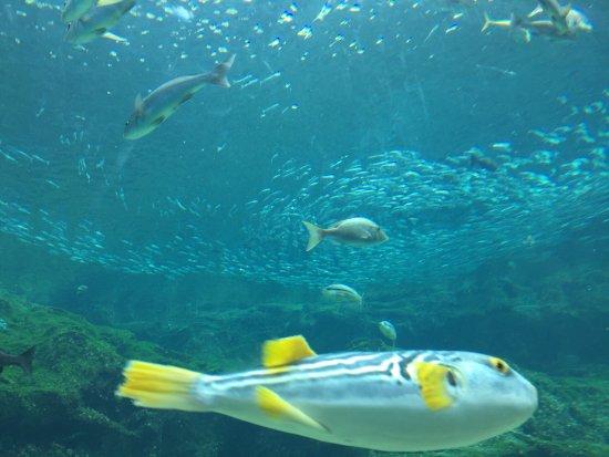 海 きらら 水族館