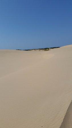 Mears, MI: Sand Dunes