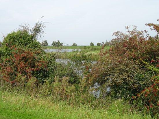 Muiden, The Netherlands: Hawtorn(Meidoorn) bushes bearing berries on Vecht river