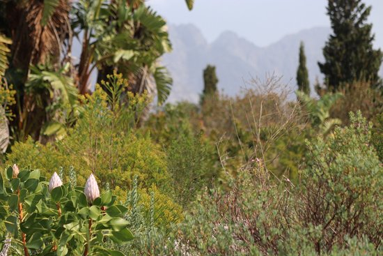 Franschhoek, Sydafrika: Don't miss out on the flower garden.