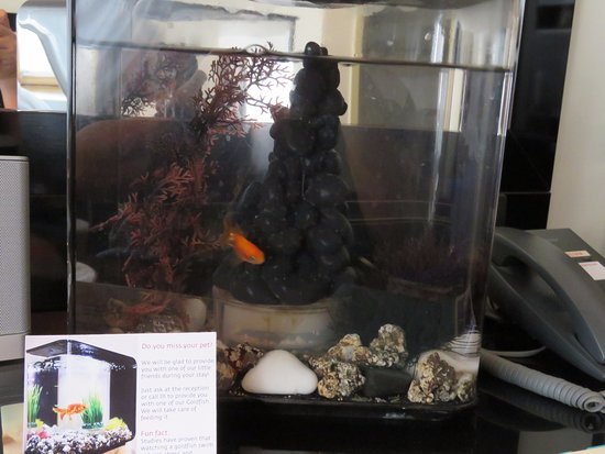 Maximilian Hotel: Borrow a pet - this goldfish can stay with you throughout your stay!