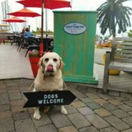 Portsmouth, RI: Dog-friendly outdoor patio and bar