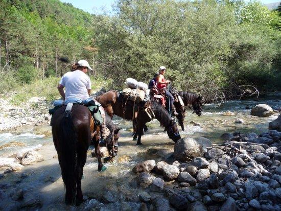 Tourrette-Levens, Frankrike: Pause fraicheur pour les chevaux