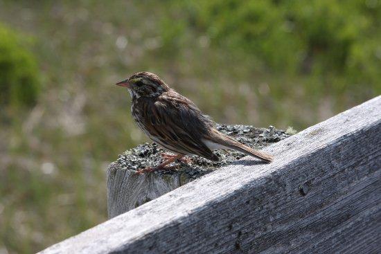 Saint-Louis-de-Kent, Kanada: The wildlife is friendly.  This bird landed right next to me!