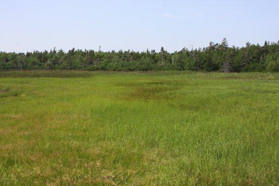 Saint-Louis-de-Kent, Kanada: Salt marsh.