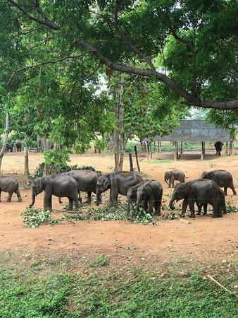 Uda Walawe National Park, Sri Lanka: Baby elephants