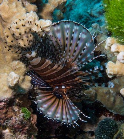 Νησί Denarau, Φίτζι: Great 5 Star PADI diving
