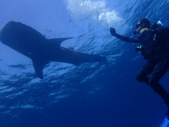 Tulamben, Indonesia: The instructor with the whale shark