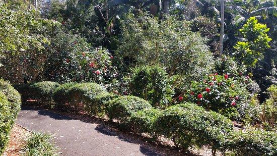 Tamborine Mountain, Australia: Flower garden walk.