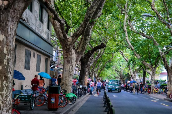 Noodle Walking Tours Shanghai: The beautiful tree-lined streets of the FFC in Shanghai