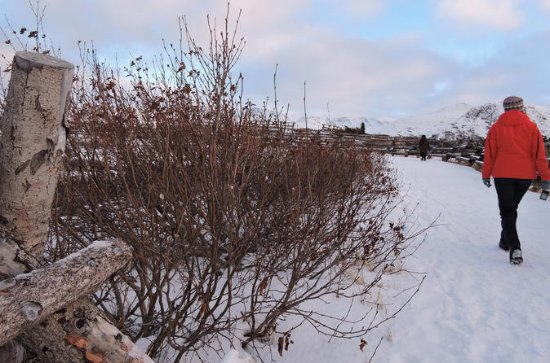Winter Scenic City Tour van Anchorage