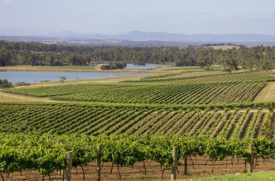 Hunter Valley Wine and Wildlife Tour