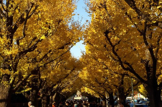 Autumn Leaves: Tokyo in Fall Full-Day ...