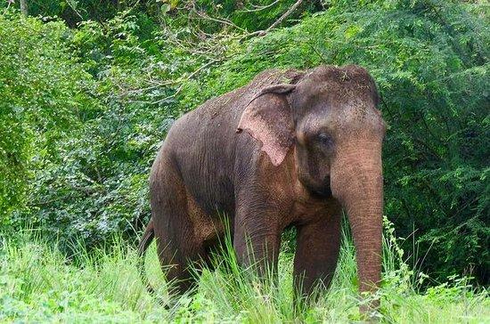 Parque Nacional Sigiriya y Minneriya...
