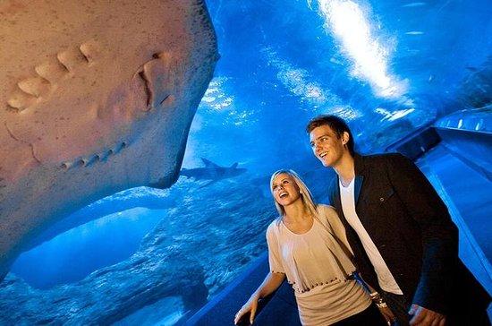 The Aquarium of Western Australia...