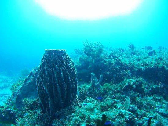 Scuba Total Cancun: Great diving experience in outside reef Cancún (Herradura, Punta Negra)