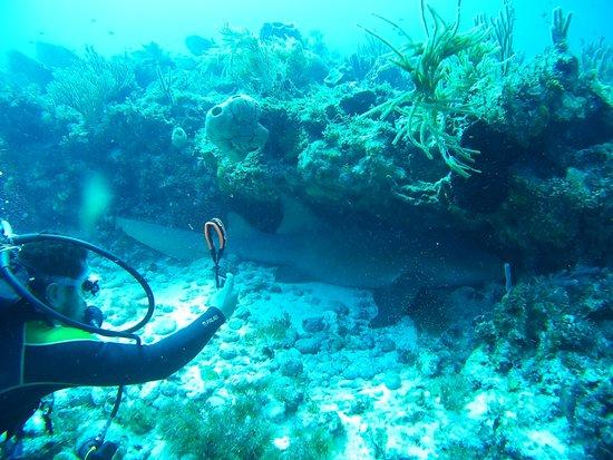 Scuba Total Cancun: Great diving experience in outside reef Cancún (Herradura, Punta Negra) - nurse shark