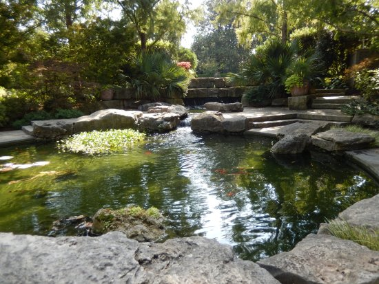 Koi pond picture of dallas arboretum botanical gardens for Koi pool opening times