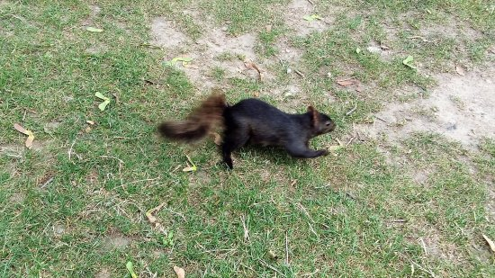 Waterloo Park: A squirrel scurrying across