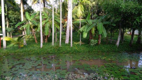 Palmgrove Lake Resort: Lotus pond and greenery along