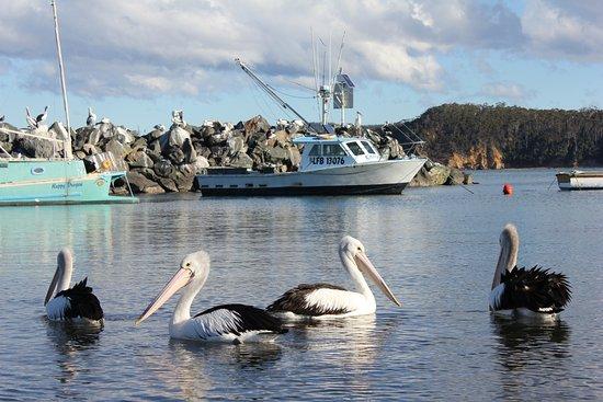 Eden, Australie : Fish Vessel at Quarantine Bay