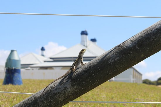 Eden, Australia: Lighthouse keeper Mr Dragon