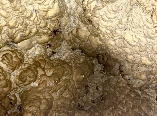 Otorohanga, Yeni Zelanda: Aranui Cave