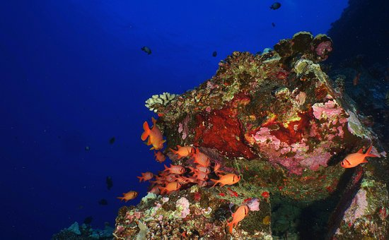 Ed Robinson's Diving Adventures: Molokini Crater End's Reef.