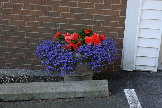Comfort Inn Halifax : It's the details that tell you how good a place is. This was by the *back* entrance!