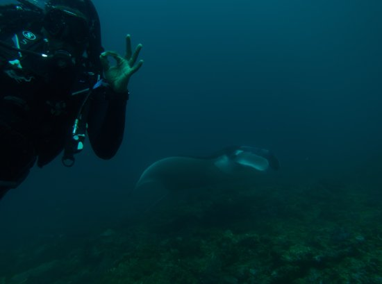 Padangbai, Indonesia: Swimming at Manta point next to this giant manta ray.. signaling my instructor that everything i