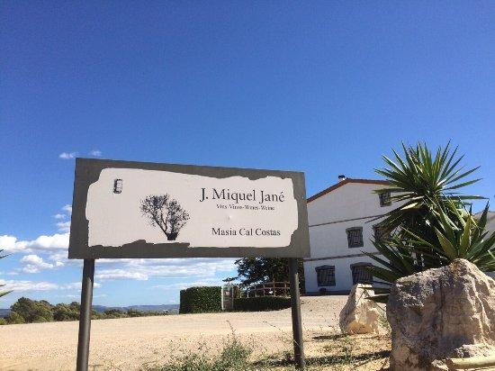 Font-Rubi, Spanien: Bodega J. Miquel Jane