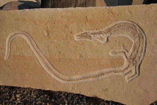 Mornsheim, Germany: Pleurosaurier, gefunden im Besuchersteinbruch Mühlheim