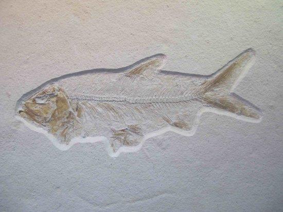 Mornsheim, Germany: Fisch, gefunden im Besuchersteinbruch Mühlheim