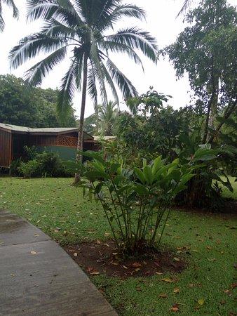Laguna Lodge Tortuguero Picture