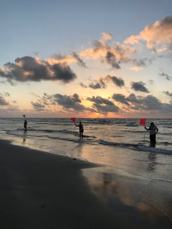 Padre Island National Seashore: photo5.jpg