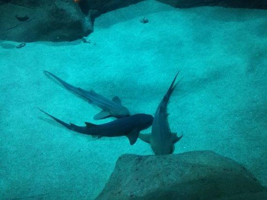 Aquarium de Biarritz : IMG_20170922_114033_large.jpg
