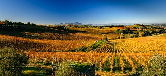 Castagnole Lanze, Italy: autumn landscape