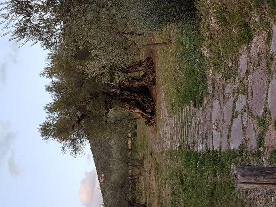 Trevi, İtalya: 20170915_185749_large.jpg