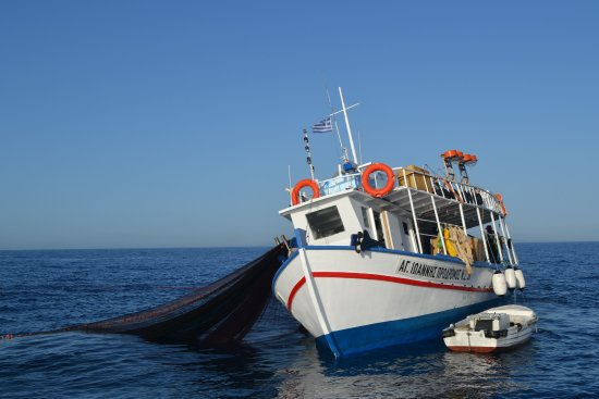 A Sea Turtle Picture Of Levante Speedboat Excursions