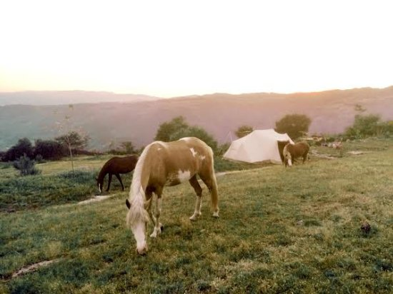 Cabeceiras de Basto, Португалия: Every now and then, the horses or donkeys might pay you a visit