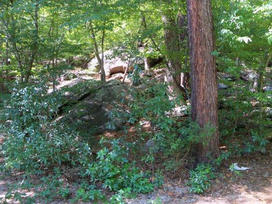 Jackson, GA: Trail Scenery