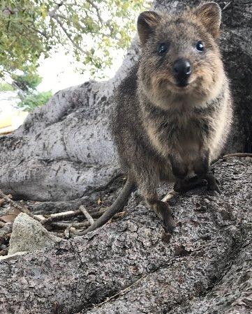 Роттнест, Австралия: photo5.jpg